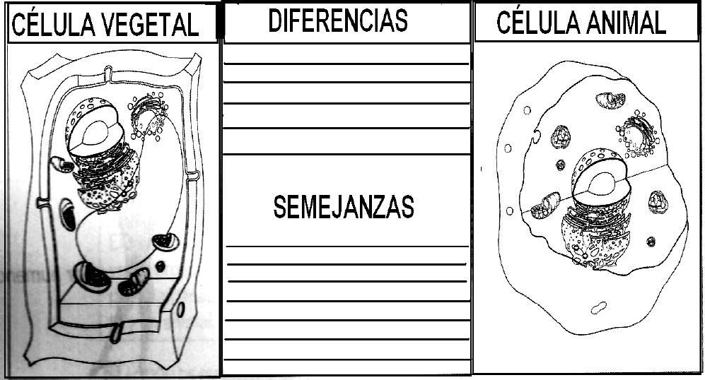 Dibujos Para Colorear Celula Animal Y Vegetal ~ Ideas Creativas ...