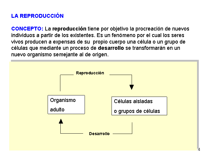 Organizaci n celular de los seres vivos procariota y for Concepto de oficina y su importancia