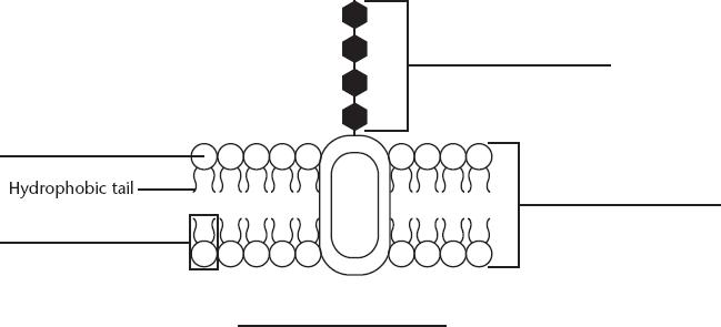 Prokaryotes and Eukaryotes - Centro de investigación y ...